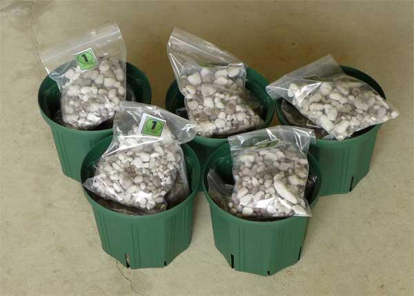 鉢植えセット5個