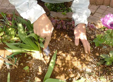 肥料の追加