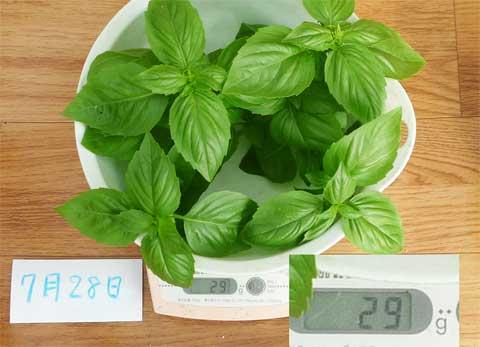 7/28-24cmポット収穫量
