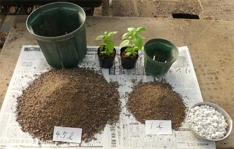 鉢と土、苗の準備