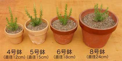異なる鉢のサイズ