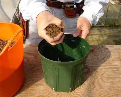 鉢に土を入れる