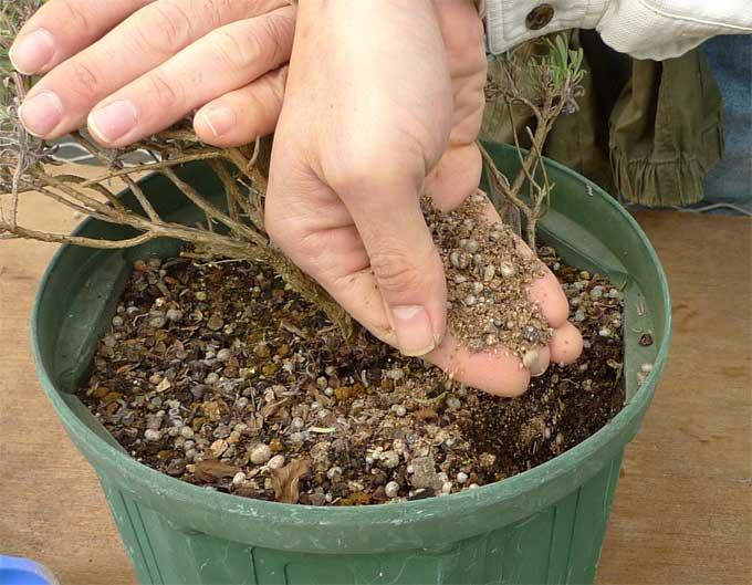 微生物肥料を加える