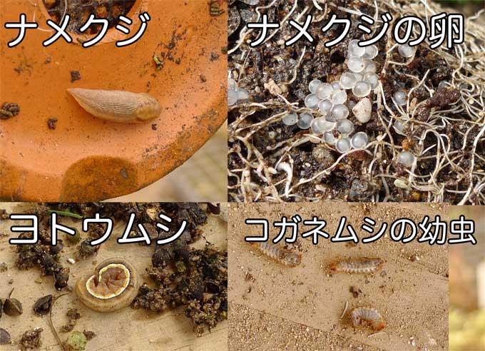 ナメクジ、夜盗虫、コガネムシの幼虫