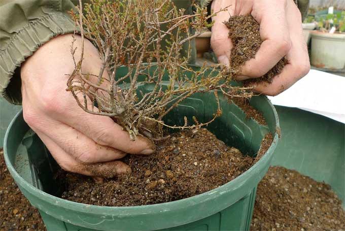 冬に行う鉢の植え替え