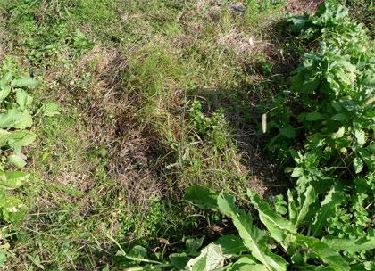 雑草が広がる畑