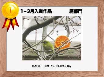 フォトコンテストエントリーNo.153 鳥取県 O様  庭部門   「メジロの夫婦」