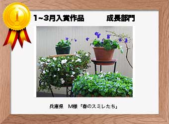 フォトコンテストエントリーNo.155 兵庫県 M様  成長部門   「春のスミレたち」