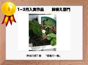 フォトコンテストエントリーNo.159 神奈川県T 様  鉢植え部門   「感動の一輪」