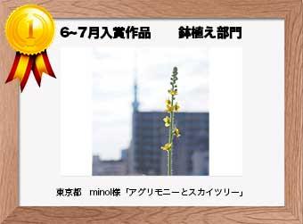 フォトコンテストエントリーNo.189  東京都 minol様  鉢植え部門   「アグリモニーとスカイツリー」