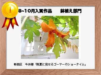 フォトコンテストエントリーNo.203  新宿区 今井様  鉢植え部門   「晩夏に見せるゴーヤーのショータイム」
