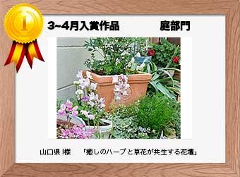 フォトコンテストエントリーNo.212  山口県 I様  庭部門   「癒しのハーブと草花が共生する花壇」