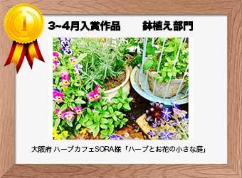 フォトコンテストエントリーNo.220  大阪府 ハーブカフェSORA様  鉢植え部門   「ハーブとお花の小さな庭」