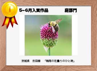 フォトコンテストエントリーNo.254  茨城県 吉田様  庭部門   「梅雨の花曇りのひと時」