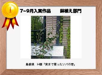 フォトコンテストエントリーNo.262  島根県 H様  鉢植え部門   「実まで育ったソバの芽」