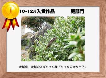 フォトコンテストエントリーNo.275  茨城県 茨城のスギちゃん様  庭部門   「タイムの守り主?」
