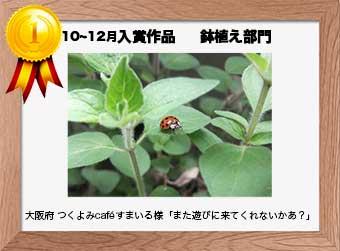 フォトコンテストエントリーNo.267  大阪府 つくよみcaféすまいる様  鉢植え部門   「また遊びに来てくれないかあ?」