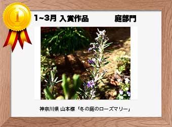 フォトコンテストエントリーNo.280  神奈川県 山本様  庭部門   「冬の庭のローズマリー」