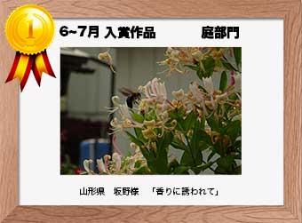 フォトコンテストエントリーNo.309  山形県 坂野様  庭部門   「香りに誘われて」