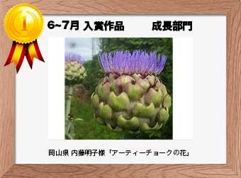 フォトコンテストエントリーNo.316  岡山県 内藤明子様  成長部門   「アーティーチョークの花」