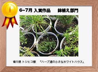 フォトコンテストエントリーNo.314  香川県 トシヒコ様  鉢植え部門   「ハーブ達の小さなホワイトハウス」