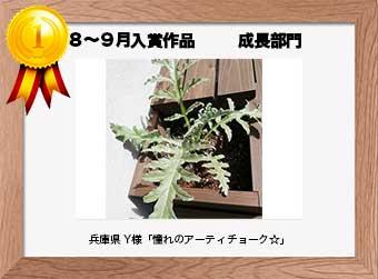 フォトコンテストエントリーNo.322  兵庫県 Y様  成長部門   「憧れのアーティチョーク☆」