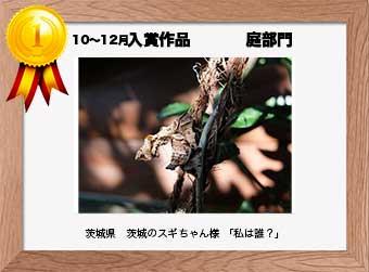 フォトコンテストエントリーNo.327  茨城県 茨城のスギちゃん様  庭部門   「私は誰?」