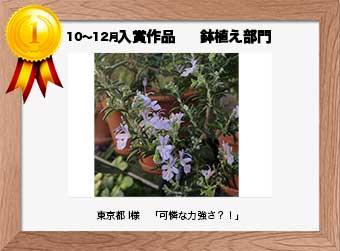 フォトコンテストエントリーNo.326  東京都 I様  鉢植え部門   「可憐な力強さ?!」
