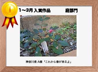 フォトコンテストエントリーNo.332  神奈川県 A様  庭部門   「これから春が来るよ」