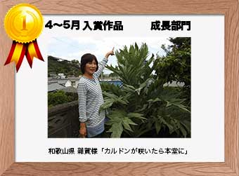 フォトコンテストエントリーNo.353  和歌山県 雜賀様  成長部門   「カルドンが咲いたら本堂に」