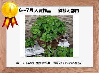 フォトコンテストエントリーNo.400  神奈川県WN様  鉢植え部門   「わたしのラプンツェルちゃん」