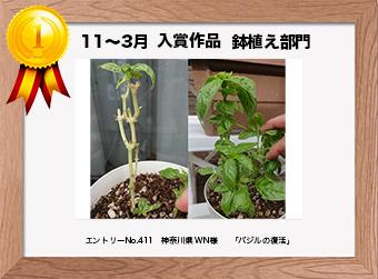 フォトコンテストエントリーNo.411  神奈川県 WN様  鉢植え部門   「バジルの復活」