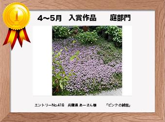 フォトコンテストエントリーNo.418  兵庫県 あーさん様  庭部門   「ピンクの絨毯」