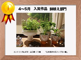フォトコンテストエントリーNo.420  大阪府 potfu様  鉢植え部門   「自作の植木鉢とハーブたち」