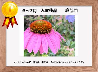 フォトコンテストエントリーNo.440  愛知県 平岩様  庭部門   「カマキリの赤ちゃんとエキナケア」
