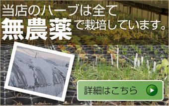 無農薬で栽培しています