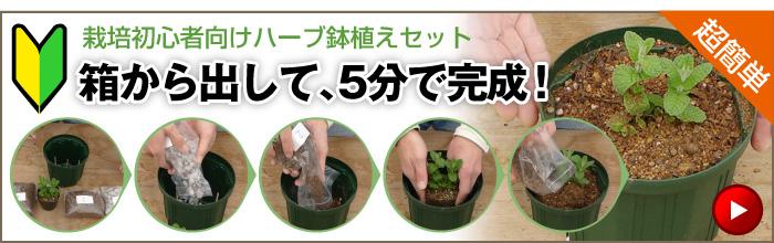 栽培初心者向けハーブ鉢植えセット