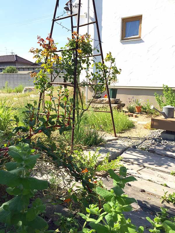 バラとハーブ達の庭