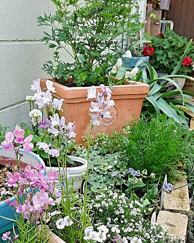 癒しのハーブと草花が共生する花壇