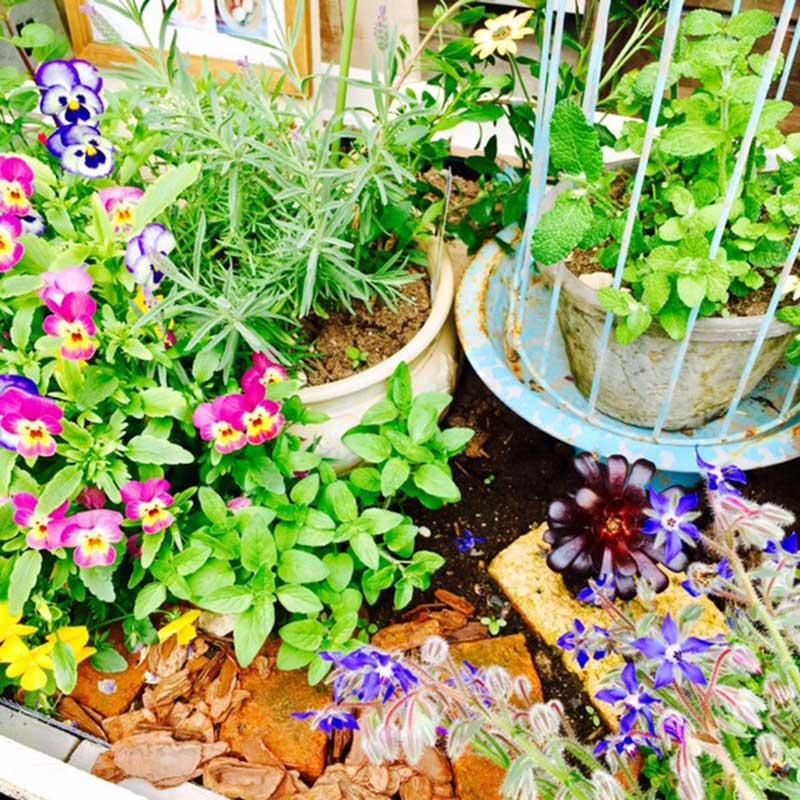 ハーブとお花の小さな庭